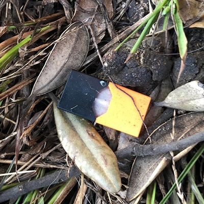 """discarded JUUL pod"""